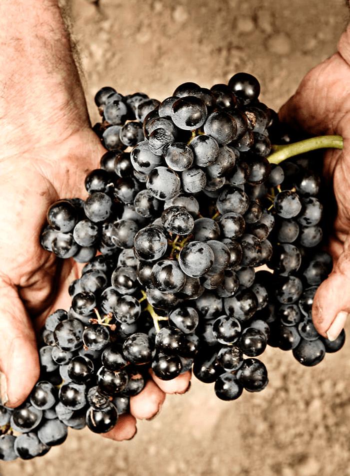bodegas taron vinos la rioja uvas
